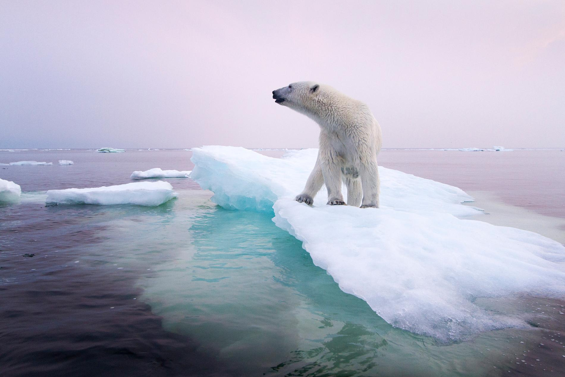 This is how we can all help fight climate change today